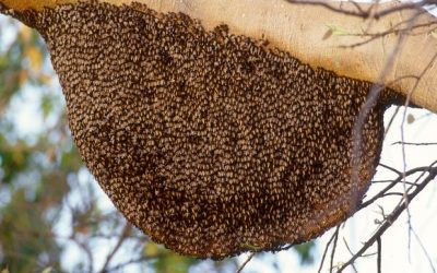 How Did the Bee Swarm Disappear?