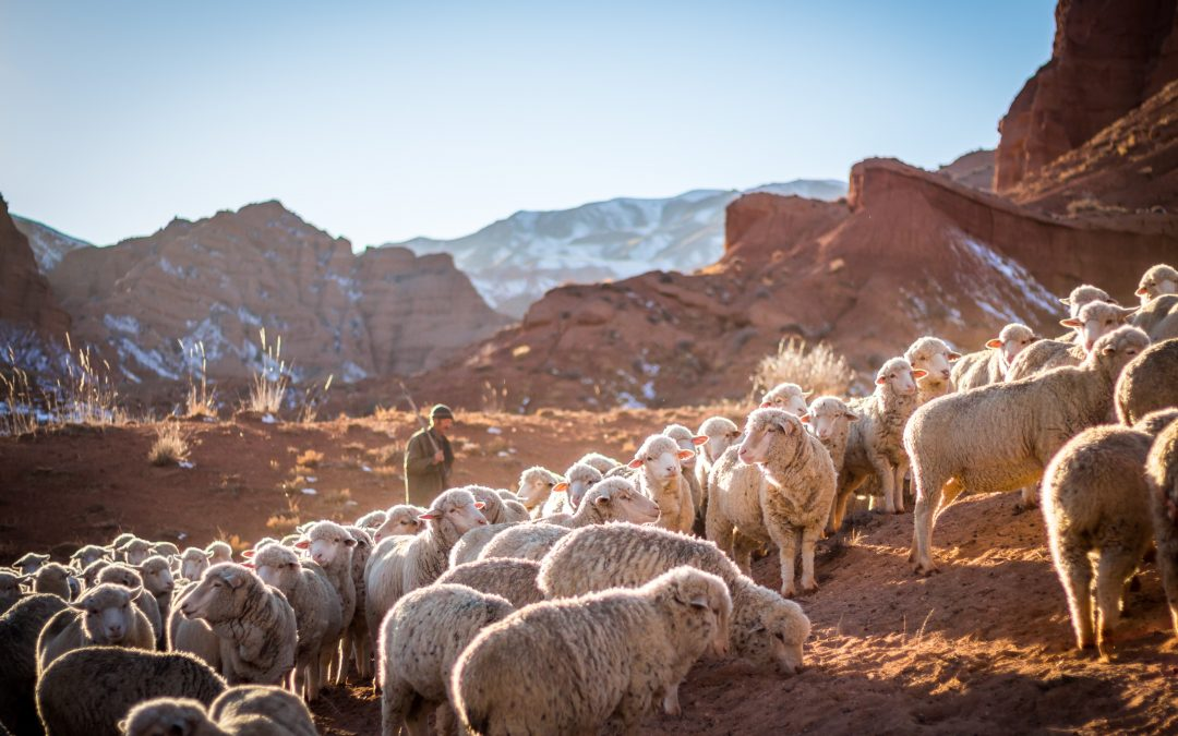 Why Shepherds Were God's First Choice