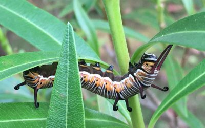 Caterpillars. And a Word For You